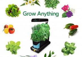 growanythingblk